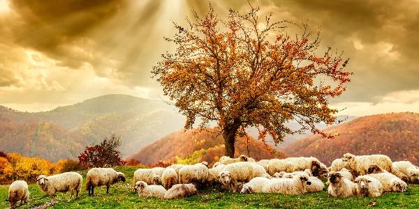 Zbawienie dotrze aż do krańców ziemi