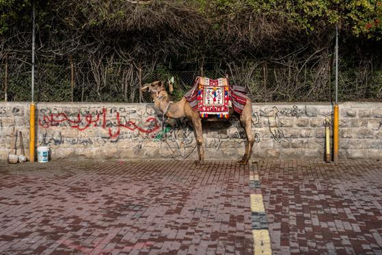 Jerusalem_0-135.jpg